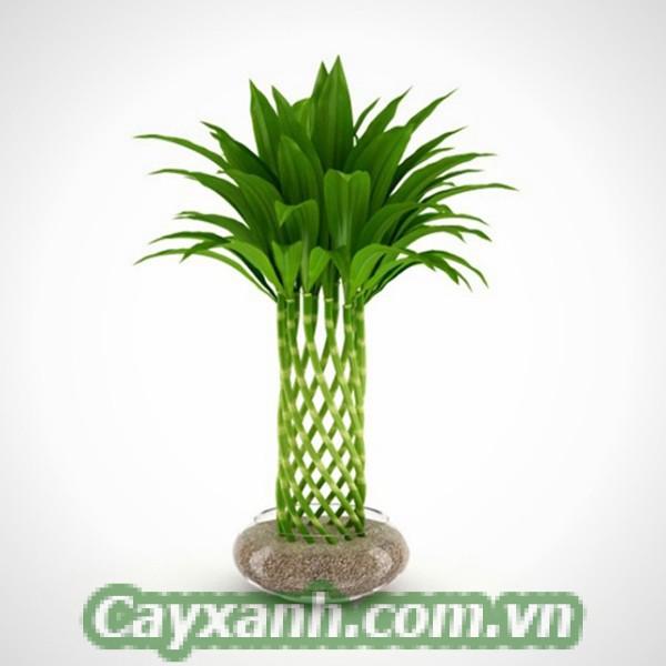 cay-phat-loc-1-600x400 Hướng dẫn tạo tháp cây phát lộc đẹp mắt