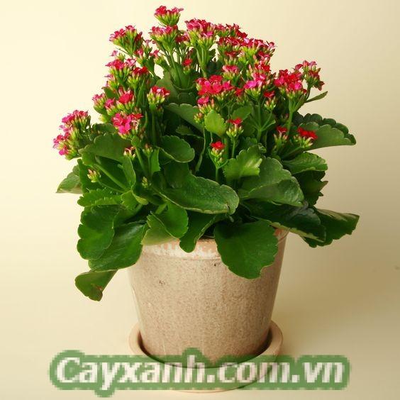 cay-trong-nha-1 Không khí thoáng mát nhờ trồng cây trong nhà