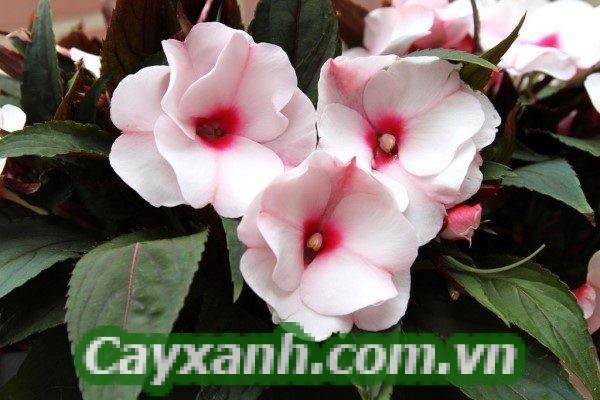 hoa-ban-cong-1-1 Hoa ban công rực rỡ sắc màu hút ánh nhìn