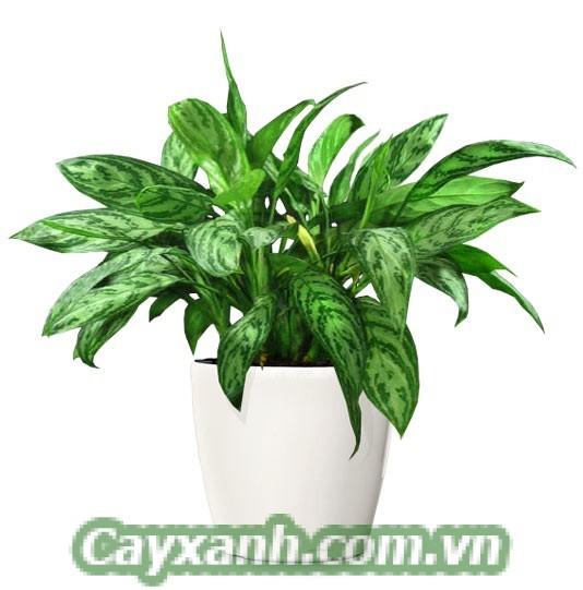 hoa-de-ban-1-533x400 Chậu hoa để bàn vừa đẹp vừa hợp phong thuỷ